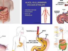 Alkolün sindirim sistemi üzerindeki etkileri