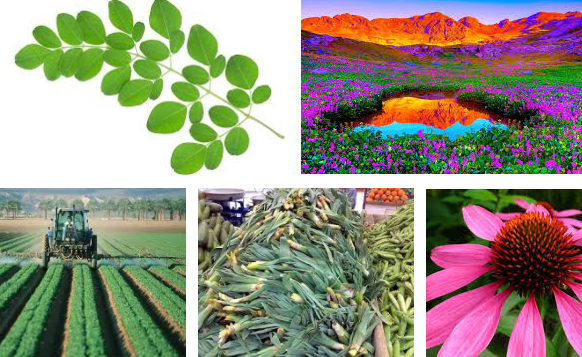 Bitkilerin Yararları ve Zararları Nelerdir