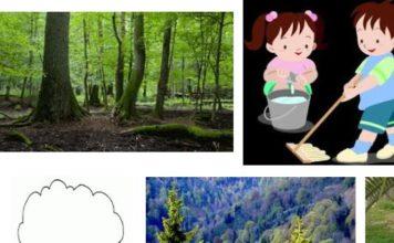Ormanları Nasıl Korumalıyız