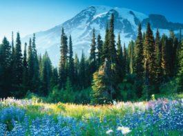 Doğa ve Çevre İle İlgili Kompozisyon
