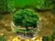 Ekolojik Denge Kavramının Anlamı Nedir