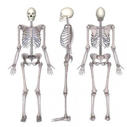 insan vücudunda kaç çeşit kemik vardır