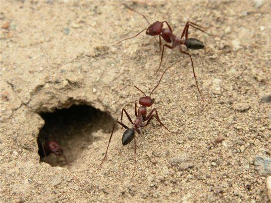 Karınca yuvası hangi yönü gösterir