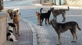 sokak köpeklerini şikayet etme