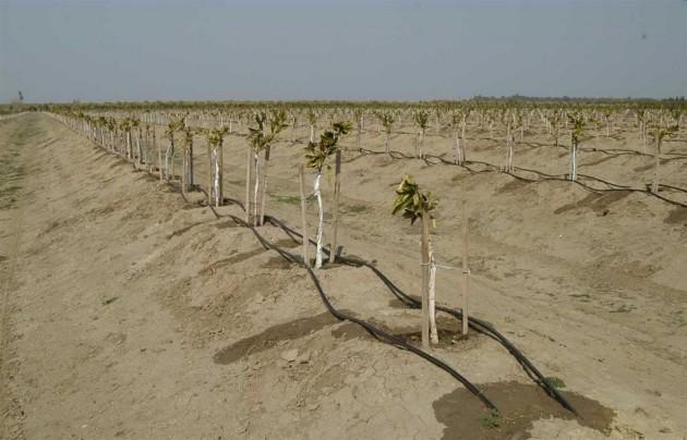 zeytin bahçesi sulama sistemi